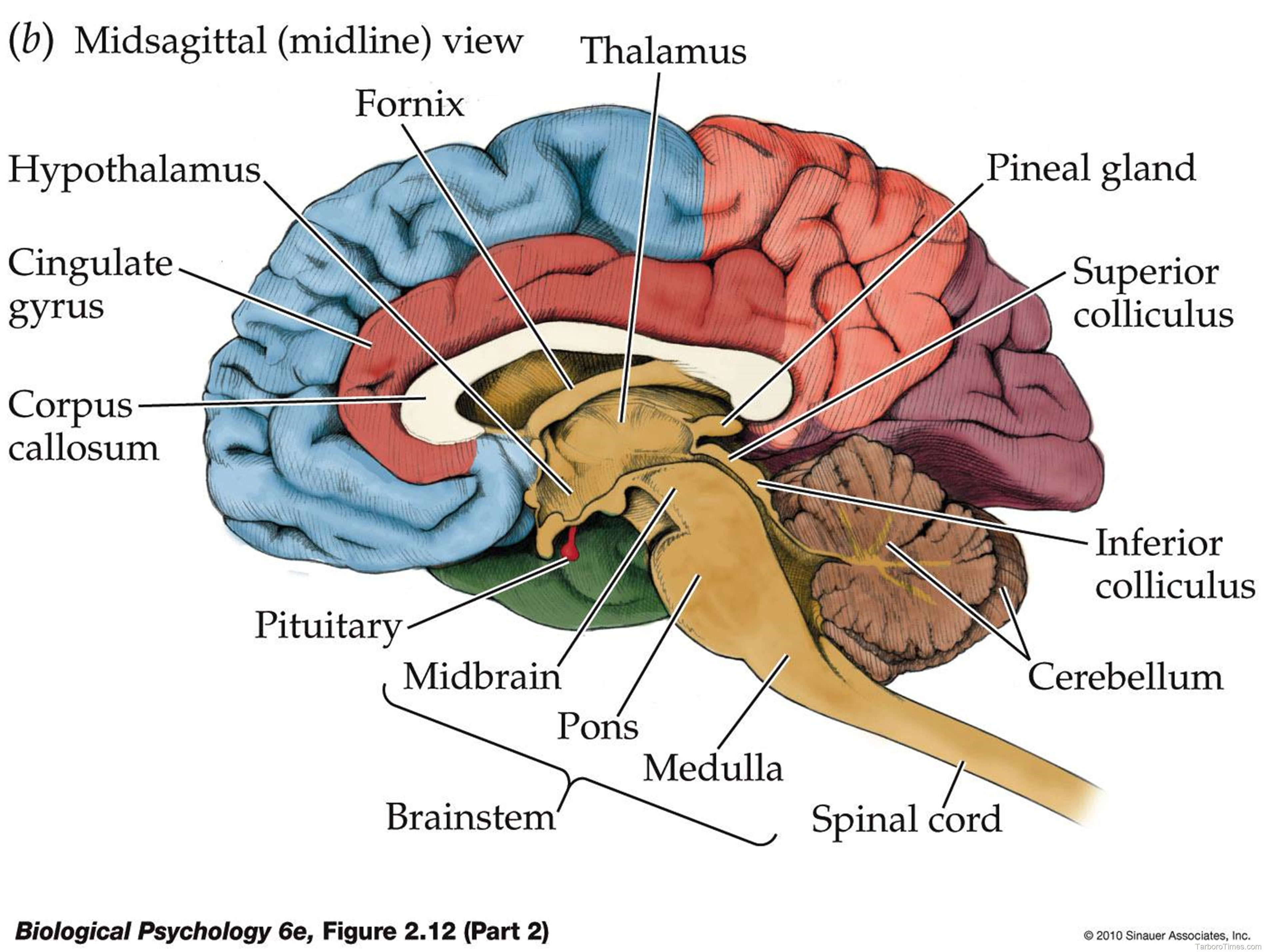 Brain Useful Graphs Lists And Charts